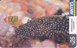 Nº 407 TARJETA DE URUGUAY DE UN PEZ  VIEJA BIGOTUDA (PEZ-FISH) - Uruguay
