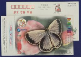 Butterfly,Lycaenidae,China 1999 Chinese Famous Butterfly Series Advertising Pre-stamped Card - Vlinders