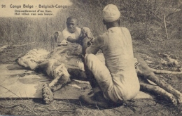 """Belgian Congo Postal Stationery Picture Postcard """"Depiction Of A Lion"""" 15 C. Posted 1922 From Kongolo - Raubkatzen"""