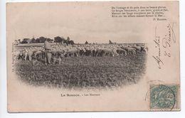 LA BEAUCE (49) - LES MOUTONS - France