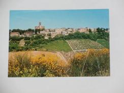 FERMO - Altidona - Panorama - Vigneti / Uva / Vino - Fermo