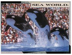 (700) USA - Sea World Orca - Fische Und Schaltiere