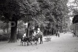 1967 JARDIN PARIS FRANCE 35mm  AMATEUR NEGATIVE NOT PHOTO NEGATIVO NO FOTO - Photography