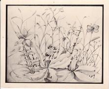 Zeichnung Wiesenstück (30631) - Botanik