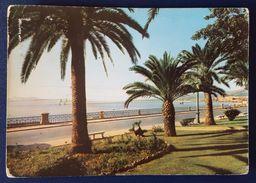 REGGIO CALABRIA - Stazione Di Soggiorno E Turismo - Il Lungomare - Palms - Vg - Reggio Calabria