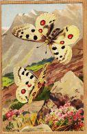Ercast075 Peu Commun Papillon APOLLON Parnassius APOLLO Illustration MILLOT 1920s L-E 204 Butterfly Schmetterling Vlinde - Papillons