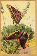 Ercast076 Peu Commun Illustration MILLOT Papillon JASIUS CHARAXES 1920s L-E 200 Butterfly Vlinder Schmetterling - Papillons