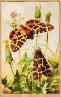 Ercast077 Peu Commun Illustration MILLOT Papillon Ecaille MARTE CHELONIA CAJA 1920s L-E 201 Butterfly Vlinder - Papillons