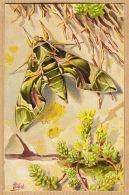 Ercast078 Peu Commun Illustration MILLOT Papillon SPHINX Du Laurier Rose DEILEPHILA NERII 1920s L-E 202 Vlinder - Papillons