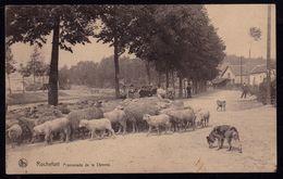 ROCHEFORT - PROMENADE DE LA LOMME  - BERGER AVEC SON TROUPEAU Et CHIEN DE BERGER - SHEEPDOG - Nels Serie 11 Nr 18 - Belgique
