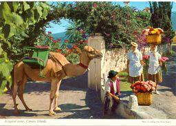 Canaries - Générique - A Typical Scene - John Hinde Dublin - Nº 2 CTG 21 - Carte Neuve - 2106 - Espagne