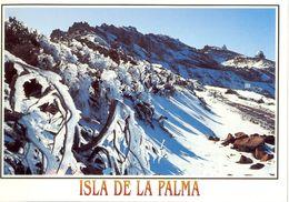 Canaries - La Palma - Nieve En La Cumbre Con Observatorio Al Fondo - Ediciones DAVID Barcelone Nº 249 - Neuve - 2131 - La Palma