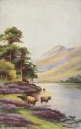 AK Near Cader Idris - N. Wales - Ca. 1910 (30650) - Merionethshire