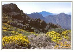Canaries - La Palma - Caldera De Taburiente - Ediciones DAVID Barcelone - Nº 330 - Neuve - 2139 - La Palma