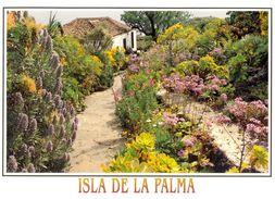 Canaries - La Palma - Villa De Mazo - El Molino - Ediciones DAVID Barcelone - Nº 290 - Neuve - 2144 - La Palma