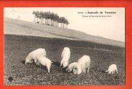 NEK-08  Souvenir De Vacances Toute La Famille En Excursion. Cochons.  Circulé En 1910 - Varkens