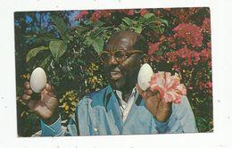 Cp , Antilles , BAHAMAS , Ardastra Garden's Owner Hedley Edwards Displays Eggs Of Flamingo , Voyagée 1963 - Bahamas