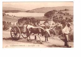 Agriculture Attelage Boeuf Boeufs Clermont Ferrand Lac D' Aydat Cpa Animée - Attelages