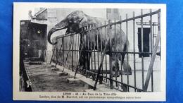 CPA ELEPHANT LOULOU DON DE M HERRIOT LYON AU PARC DE LA TETE D OR 1938 - Elephants
