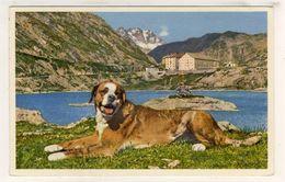 LOT  DE 35 CARTES  POSTALES  ANCIENNES  DIVERS  FRANCE  N91 - Postcards