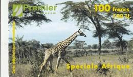 France - Spéciale Afrique - Giraffe In Savannah - France