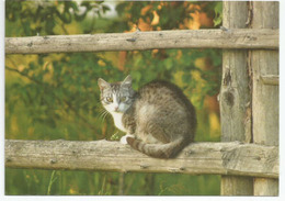 Le Chat De Mon Voisin, Belle Carte Postale De Belarus, Adressée ANDORRA, Avec Timbre à Date Arrivée - Cats
