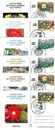 Romania 2005 Postcard Cactus From Botanical Garden Cluj - Covers & Documents
