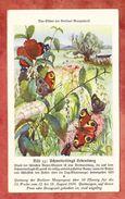 Quittung Berliner Morgenpost 1934, Tier-Bilder, Schmetterling (41802) - Deutschland