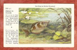 Quittung Berliner Morgenpost 1934, Tier-Bilder, Schuetzenfisch (41804) - Deutschland