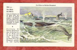 Quittung Berliner Morgenpost 1934, Tier-Bilder, Blauwal (41806) - Deutschland