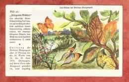 Quittung Berliner Morgenpost 1934, Tier-Bilder, Fliegende Blaetter (41808) - Deutschland
