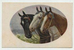Cavalli - Horses - M.MUNK WIEN - Cartolina Non Viaggiata - Horses