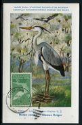 Etats Unis - Carte Maximum  - Animaux - Oiseaux - Maximumkarten (MC)