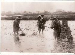 Photo Photographie Culture Du Riz Au Japon 1936 Agriculture Rizière Costumes - Métiers