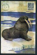 Canada - Carte Maximum 1954 - Animaux - Le Morse - Maximumkaarten