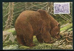 Finlande - Carte Maximum 1954 - Animaux - L' Ours - Maximumkaarten