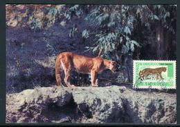 Uruguay - Carte Maximum 1971 - Animaux - Le Puma - Uruguay