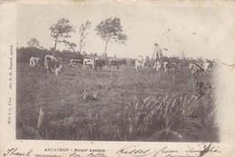 CPA Arcachon, Berger Landais, Herder, Shephert (pk39141) - Arcachon