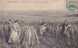CPA, En Champagne, Le Travail De La Vigne, Défichage Des Echalas (pk39180) - Epernay
