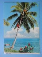 Tanzania, Coconut Picking - Mare E Palma Da Cocco - Storia Postale Opening Of Mwenge Satellite Earth Station 1 Sh 1979 - Tanzania