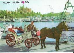 CPM -ESPAÑA  - PALMA DE MALLORCA  ( Souvenir De ) - 1983 . - Gruss Aus.../ Gruesse Aus...