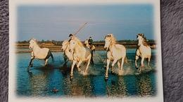 CPM CHEVAL CHEVAUX DE CAMARGUE PHOTO D PAYAN - Pferde