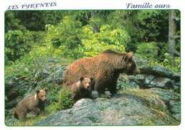 Animaux °° Famille D'ours Bruns Dans Les Pyrénées -  Neuve - Beren