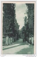Juan-les-pins - Allee Des Eucalyptus - Antibes
