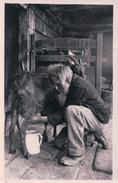Elevage De Chèvres, Bergbauer Beim Ziegen Melken (58) - Elevage