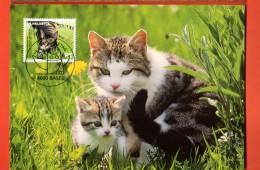 MIA-02  Chats, Cats Gatti Katze. Carte Maximum-Karte. - Chats