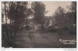Alendia - Alcanada - Mallorca