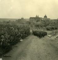 Moyen Orient Lilban Cana Al Galil Kana Ancienne Stereo Photo NPG 1900 - Stereoscopic