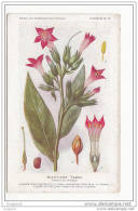 Theme Fleurs - Nicotine - Tabac - Edition Etablissements Fumouze - Tabaco