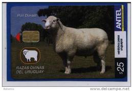Uruguay TC440a Razas Ovinas -Poll Dorset- - Uruguay